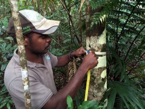 Tree Measurement Assessment, McIlwraith