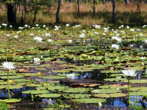 A healthy lagoon excluded from feral animals