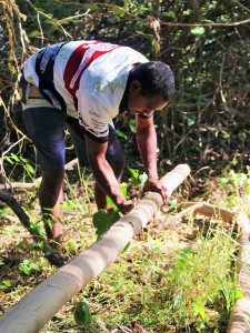 Collecting bark for cultural practices